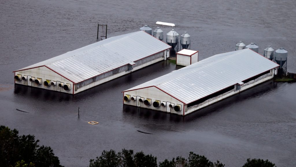 Mandatory Credit: Photo by Steve Helber/AP/REX/Shutterstock (9884360h) A hog farm is inundated with floodwaters from Hurricane Florence near Trenton, N.C Tropical Weather North Carolina, Trenton, USA - 16 Sep 2018